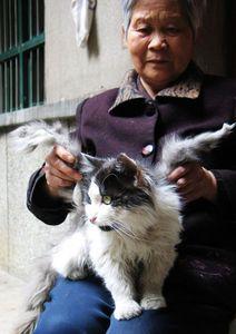 cat-flaps2.jpg