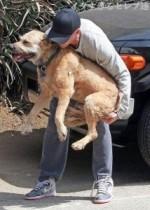 【イタすぎるセレブ達】ライアン・ゴズリング、13歳の老犬が心配で仕事も手につかず。