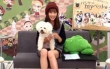【エンタがビタミン♪】安田美沙子、「この子がいればいい」。男より犬を愛する女性タレントたち。