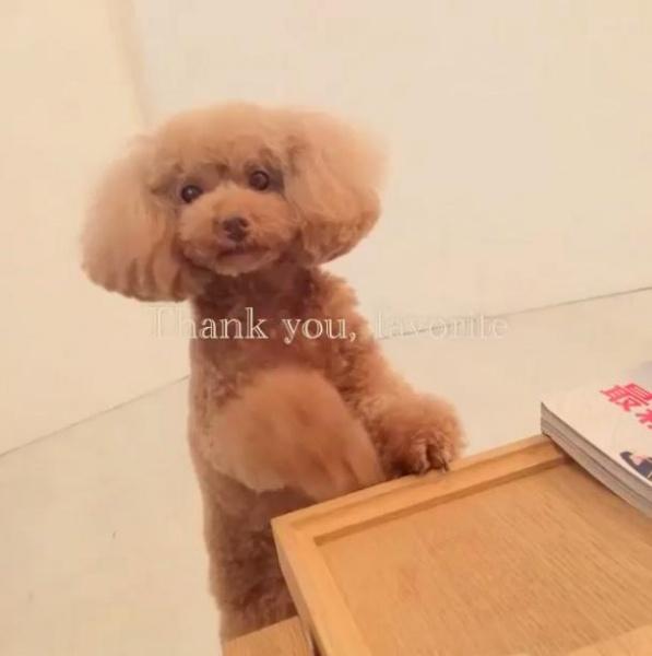 【エンタがビタミン♪・番外編】篠田麻里子の愛犬が深い眠りに。ファンもお別れ「たくさんの笑顔をありがとう」