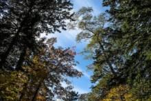 【アフリカ発!Breaking News】絶景スポットから90メートル落下した男性、奇跡の生還。(南ア)