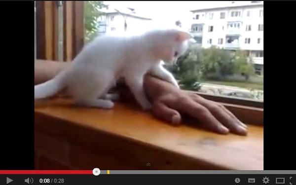 【EU発!Breaking News】ご主人様の腕を守りたい! 飼い主を心配する猫の動画が大人気。