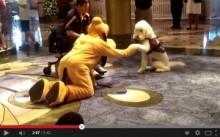 【海外発!Breaking News】ディズニーの着ぐるみ「プルート」と本物の犬に友情が芽生える、ほのぼの動画が大人気。