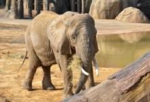 【アジア発!Breaking News】ケーンクラチャン国立公園で女性観光客が象に踏みつけられ死亡。(タイ)