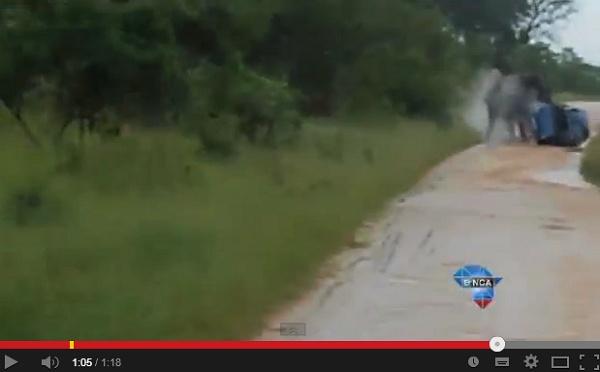 南アの国立公園で象に体当たりされ車が横転。 画像はYouTubeのスクリーンショット
