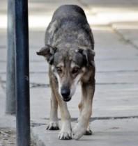【南米発!Breaking News】『ボリビアの忠犬ハチ公』が大きな話題に。世話主の死後から5年、今も同じ場所で待ち続ける。