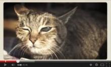 """【エンタがビタミン♪】中川翔子の新作MV『9lives』は""""猫好き""""さえ「お腹いっぱい!」<動画あり>"""