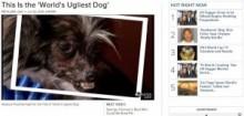 【米国発!Breaking News】「世界一醜い犬コンテスト」優勝のピーナッツ君には、悲しい過去が。(加州)