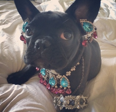 【イタすぎるセレブ達】レディー・ガガ、愛犬への過剰なドレスアップで動物愛護団体の怒りを買う。