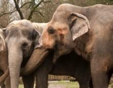 【アジア発!Breaking News】ヘロイン依存になってしまった4頭の象。1年の治療を経て群れの中へ。(中国)