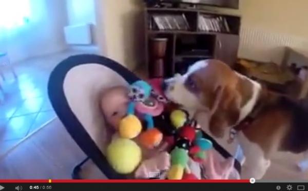【海外発!Breaking News】飼い犬が赤ちゃんをあやすために奮闘。大量オモチャ攻めの動画が大人気。