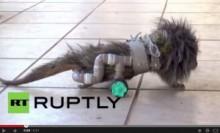 【南米発!Breaking News】下半身マヒのヤマアラシに見事な歩行補助器。獣医の卵が腕をふるう。(ブラジル)