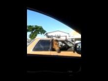 【南米発!Breaking News】ウマ、普通乗用車の後部座席におとなしく乗る。(ブラジル)