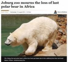 【アフリカ発!Breaking News】日本生まれのホッキョクグマ、アフリカ大陸で最後の1頭になるも死亡。(南ア)