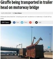 【アフリカ発!Breaking News】キリンの頭を陸橋が直撃。輸送中のトレーラーから首を出していたため死亡。(南ア)