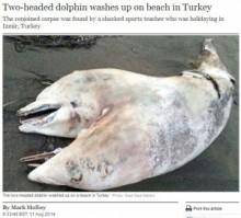 """【中東発!Breaking News】2つの頭を持つ""""結合双生""""の白いイルカ、海岸に打ち上げられる。(トルコ)"""
