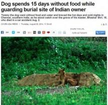 【アジア発!Breaking News】10代で急逝したご主人の墓のそばで15日間動かず。やせ細った忠犬を保護。(印)
