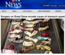 【米国発!Breaking News】食欲不振の犬の胃から44枚ものソックス。人の足の臭いが好きすぎた!?(オレゴン州)