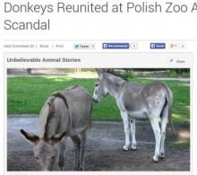 【海外発!Breaking News】「交尾が過激」。ロバのカップルを引き離した動物園に批判の嵐。(ポーランド)