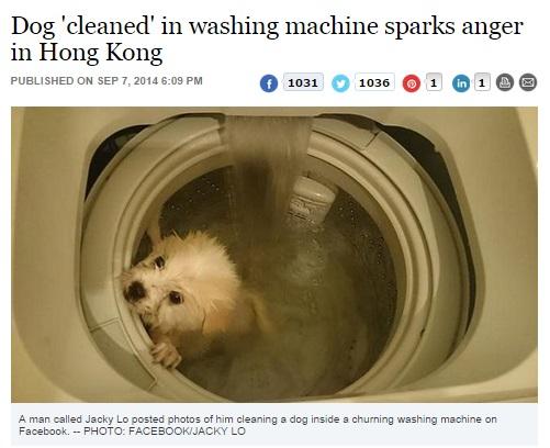 【アジア発!Breaking News】「洗濯機で犬を入浴させたら死んだ」。Facebookの衝撃写真に警察も動く。(香港)