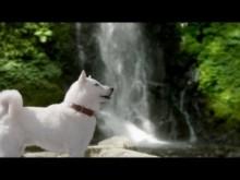 【エンタがビタミン♪】若尾文子、白戸家のお父さんのリアルな実態を暴露。「同じ犬が何匹もいる」「餌で誘導」