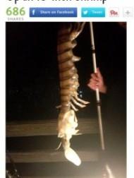 【米国発!Breaking News】体長45cmの巨大生物が釣竿に! 古代に生息したシャコの生き残りか。(フロリダ州)