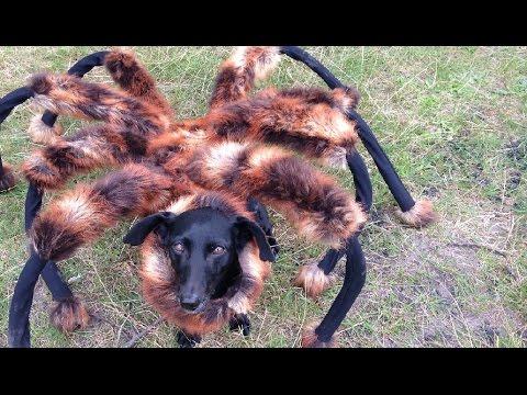 【EU発!Breaking News】ポーランドで巨大蜘蛛が大暴れするイタズラ動画が大人気。