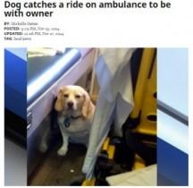 【海外発!Breaking News】飼い主が乗った救急車を全力で追った愛犬。隊員のハートフルな決断に拍手。(米)