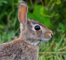 【海外発!Breaking News】生物の授業中、ウサギを熱湯につけ頭を落とした非常勤講師。(米)
