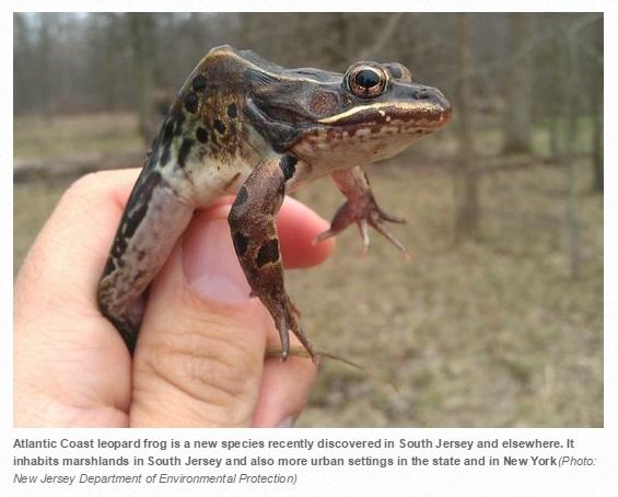 【海外発!Breaking News】新種のカエルが発見される。セキのような唸り声が特徴。(米)