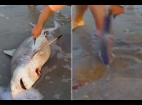 【海外発!Breaking News】南アで絶命した母サメに緊急帝王切開。赤ちゃんは無事、海へ。
