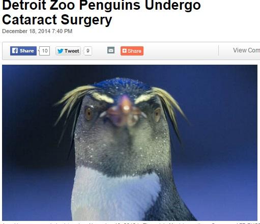 【海外発!Breaking News】動物園のご長寿ペンギン、白内障の手術を受ける。(米)