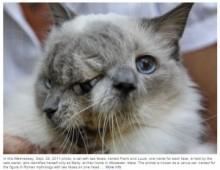 """2つの顔を持った猫""""フランク&ルイ""""、癌のため安楽死。15歳で天国へ。(米)"""