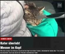 【海外発!Breaking News】頭に包丁が突き刺さった野良猫、摘出手術を受けて無事回復。(ウクライナ)