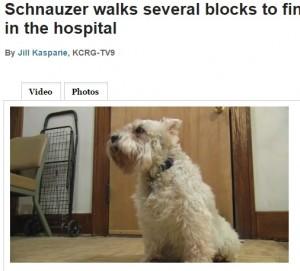 小犬、4時間かけて飼い主の入院先にたどり着く(画像はkcrg.comのスクリーンショット)