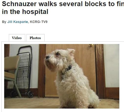 【海外発!Breaking News】脱走した小犬、4時間かけて飼い主の入院先へ。どうしても会いたかった!?(米)