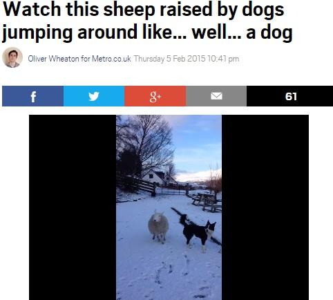 【海外発!Breaking News】自らを牧羊犬だと信じるヒツジ、ボーダー・コリーとスキップ、ジャンプ!(英)<動画あり>