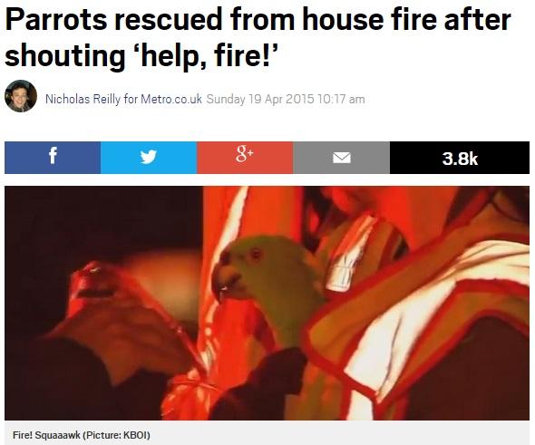【海外発!Breaking News】火事発生。「Help!」「Fire!」と叫んで救出されたオウムたち。(米)