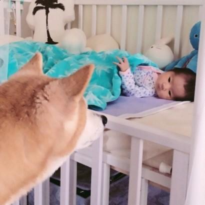 """【エンタがビタミン♪】アンガ・山根、娘の初めての友達は柴犬の""""はなちゃん""""。一緒に写る姿にファンもほっこり。"""