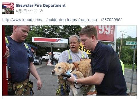 """事故にあった盲導犬の""""フィーゴ""""(画像はfacebook.com/BrewsterFireDepartmentのスクリーンショット)"""