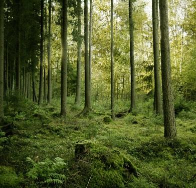 【海外発!Breaking News】森林を走行中にガス欠。自力で出産した女性、2日間救助を待つ(米)