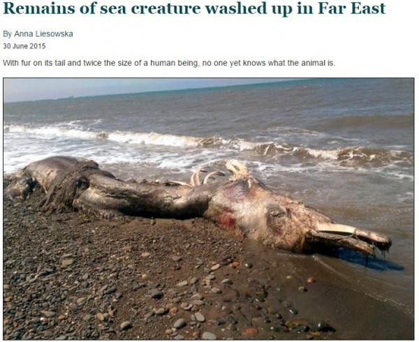 【海外発!Breaking News】毛の生えたイルカ? サハリン州の海岸に打ち上げられた謎の生物。