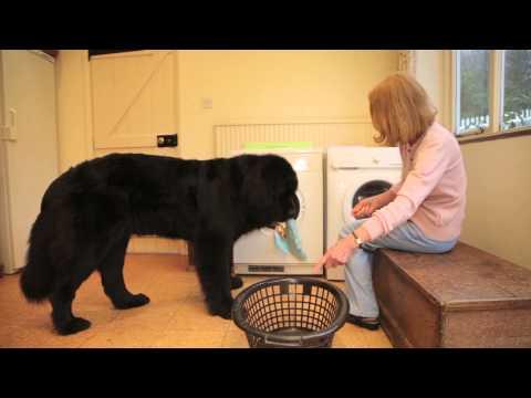【海外発!Breaking News】超賢い愛犬が調理補助、ゴミ出し、洗濯。クシャミをすればティッシュも(英)