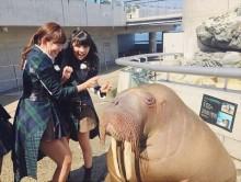 """【エンタがビタミン♪】こじはる、セイウチに会う。AKB48""""リアクション姫""""2人が本領発揮。"""