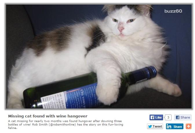 【海外発!Breaking News】ワイン貯蔵庫で発見された迷い猫、急性アルコール中毒に(独)