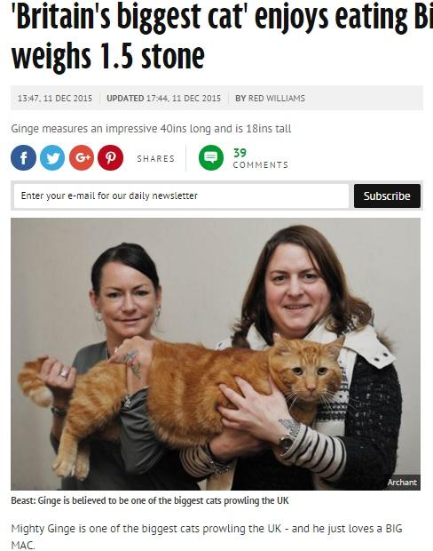 【海外発!Breaking News】さすがイギリス、さすがマック。10kgの巨大猫は「ビッグマック」がお好き。