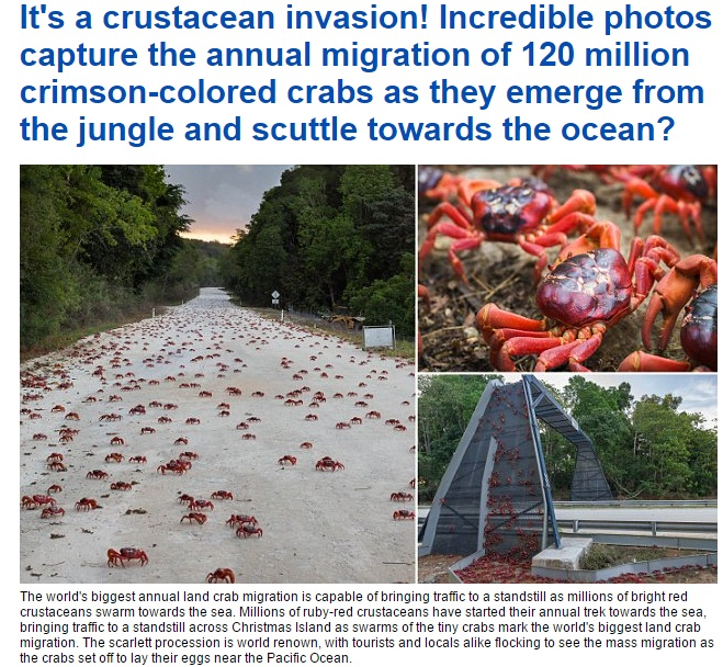 【海外発!Breaking News】クリスマス島でアカガニの大移動始まる。その数1億2千万!(豪)