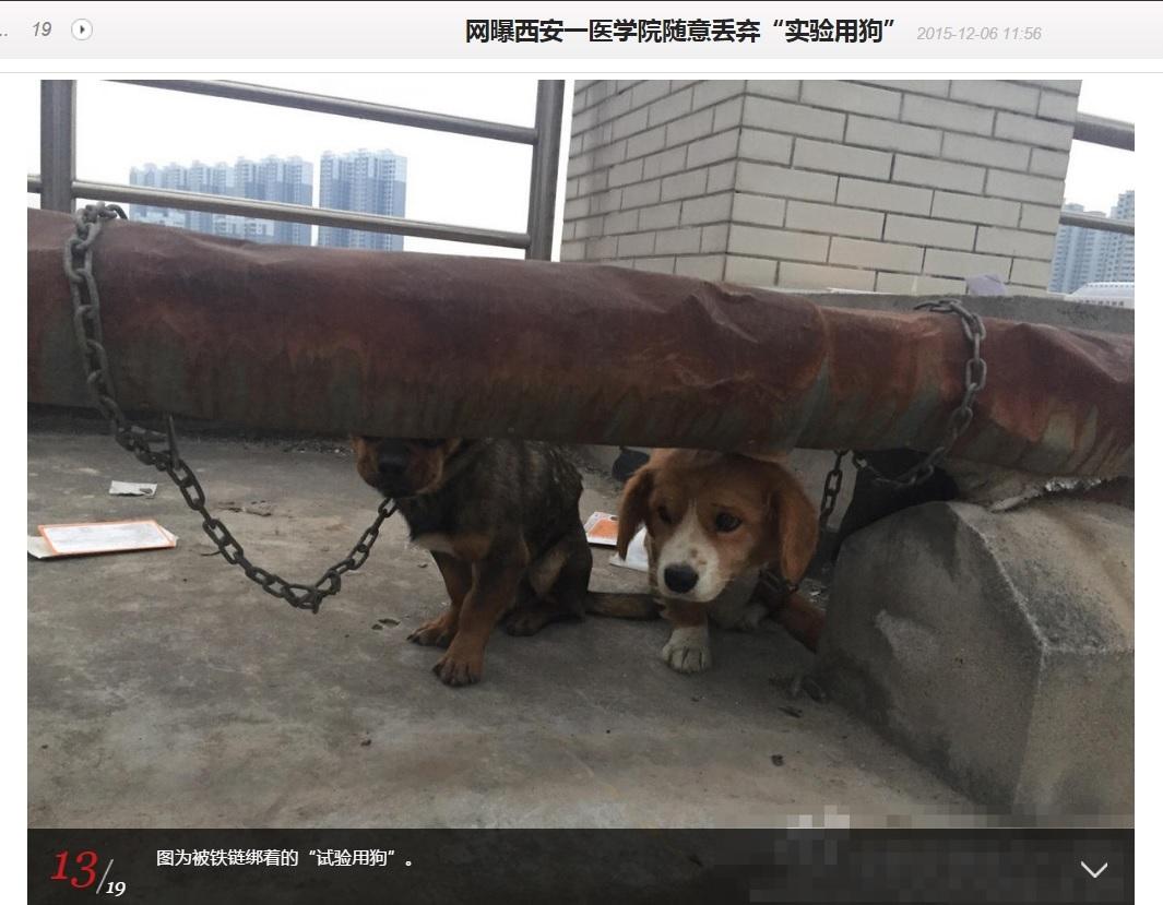 【海外発!Breaking News】医科大学の実験に使われた犬、屋上に生きたまま放置(中国)