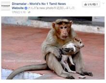 """【海外発!Breaking News】子犬をひたすら守る猿 """"まるで母親""""と評判に(印)"""