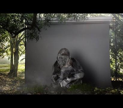【海外発!Breaking News】手話を学んだゴリラ「人間は愚かだ」とメッセージ<動画あり>